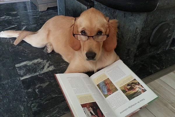 Adiba studerar