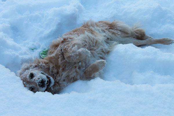Snöälskande Haldir njuter för fullt